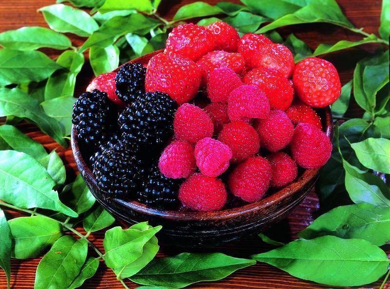 Valle del Chiese e Sapori - I piccoli frutti